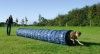 Agility Tunnel 5 Metre